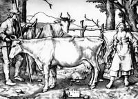 Коровница (Л. Лейденский, гравюра на меди, 1510 г.)