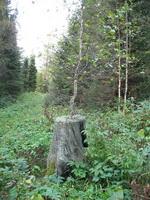 Регенерация дерева